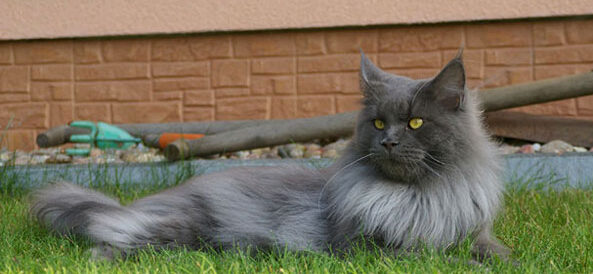 Kot i zagrożenia poza domem