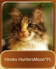 Hiroko Maine Coon