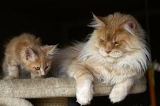 aktywność kotów