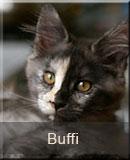 kotka Maine Coon Buffi z hodowli kotów rasowych Nightwalker*PL z Gniezna