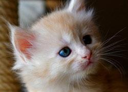 czy kot tęskni