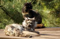 drugi - kolejny kot w domu