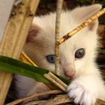 fajne zdjęcia kotów