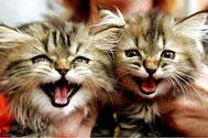 felinoterapia - moc kota