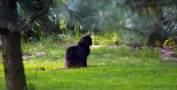 Gdzie chodzi kot