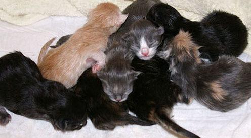 Mamy małe kocięta