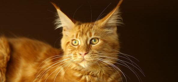 Osobowość kota
