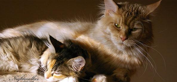 Szczepienia u kotów