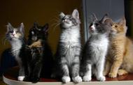 więzi między kotami i ludźmi