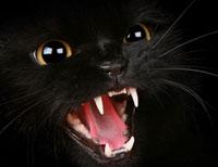 zdrowe zęby o kota