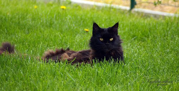 Żywienie kota – mity żywieniowe
