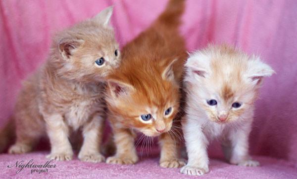 Kocięta – nowe zdjęcia!