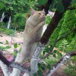 Goofi Nightwalker *PL poluje na drzewie
